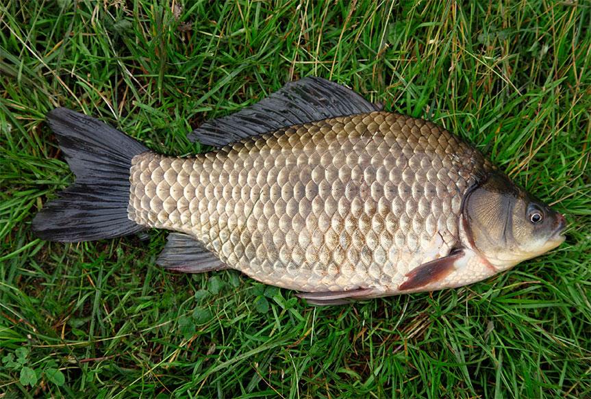 на что ловится рыба